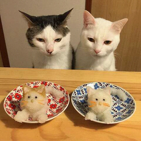 Kucing milik Nao Miuno