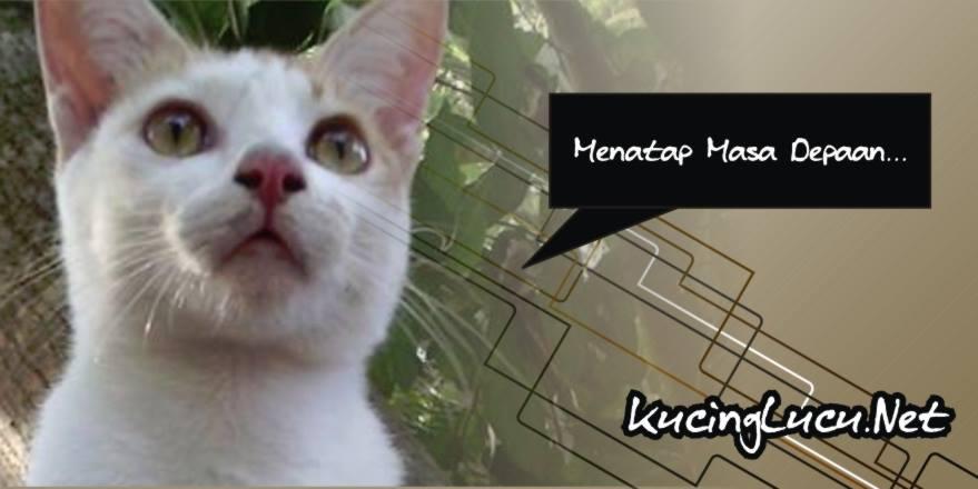 kucinglucu - Fanspage Cat Lovers yang Perlu Anda Like