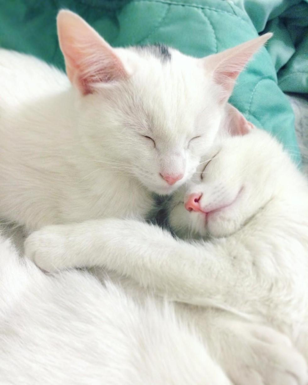 Kitten Iris dan Abyss. Gambar: lovemeow.com