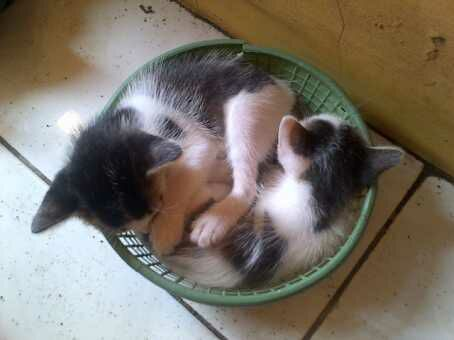 Lomba tidur..zzz. Gambar: Sumpung.com