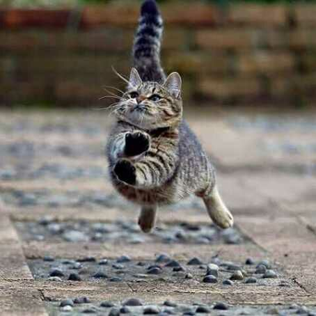 wp 1471382932195 - Parade Kucing Kemerdekaan