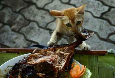 wp 1471385059065 - Parade Kucing Kemerdekaan