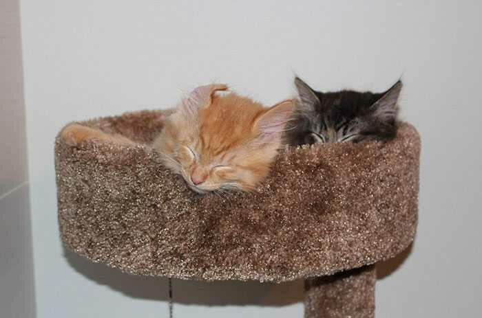wp 1471873257404 - Lucu : Meski Tidak Muat, Kucing ini Tetap Memaksa Tidur Bersama