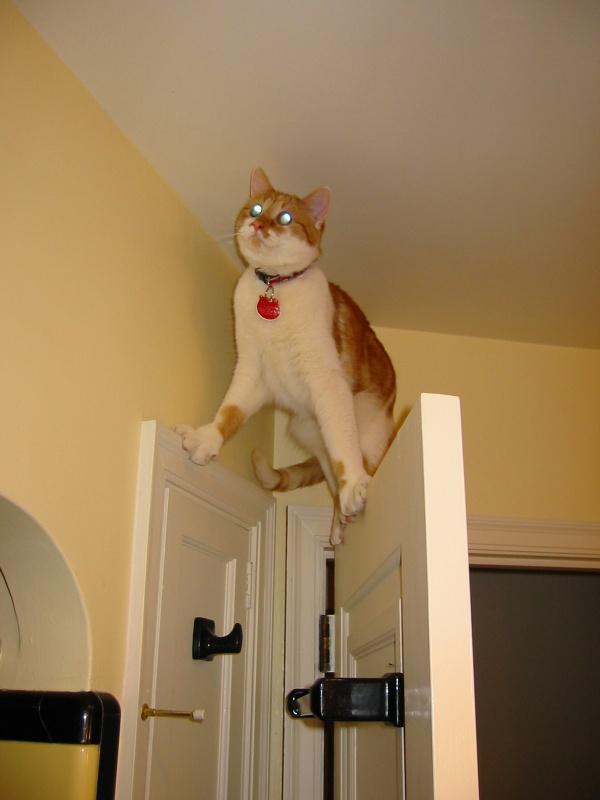 wp 1471987924489 - Ketika Kucing Terlalu Asik Bermain