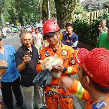 Salah seorang tim Animal Rescue saat berhasil menyelamatkan kucing tersebut