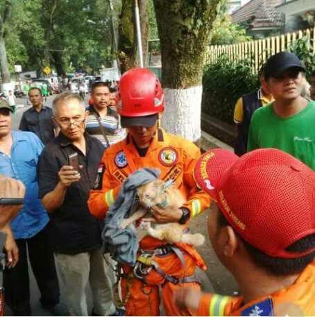 wp 1472502543736 - Intip Aksi Heroik Petugas Tim animal Rescue Bandung Selamatkan Seekor Kucing