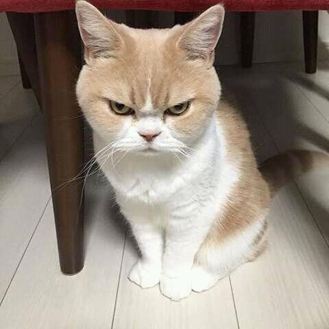 wp 1472588991283 - Kumpulan Wajah Jutek Kucing yang Bikin Gemas