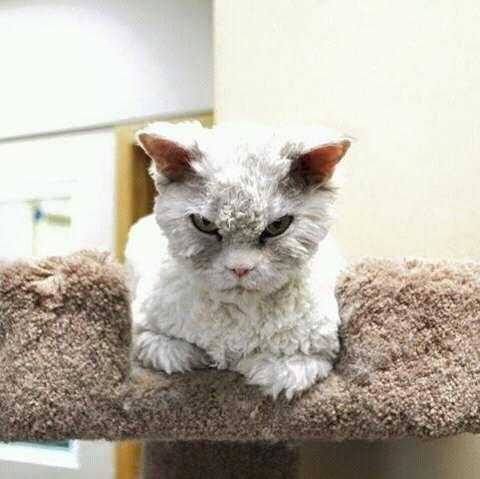 wp 1472589135312 - Kumpulan Wajah Jutek Kucing yang Bikin Gemas