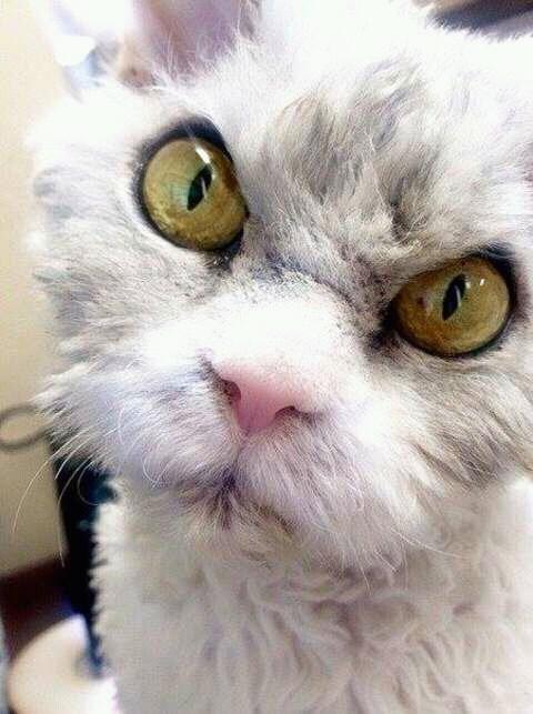 wp 1472589182146 - Kumpulan Wajah Jutek Kucing yang Bikin Gemas
