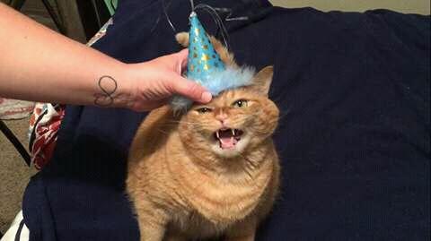 wp 1472589414567 - Kumpulan Wajah Jutek Kucing yang Bikin Gemas