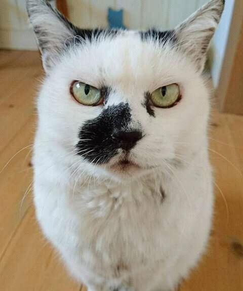 wp 1472589469780 - Kumpulan Wajah Jutek Kucing yang Bikin Gemas