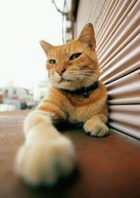 wp 1472589516223 - Kumpulan Wajah Jutek Kucing yang Bikin Gemas