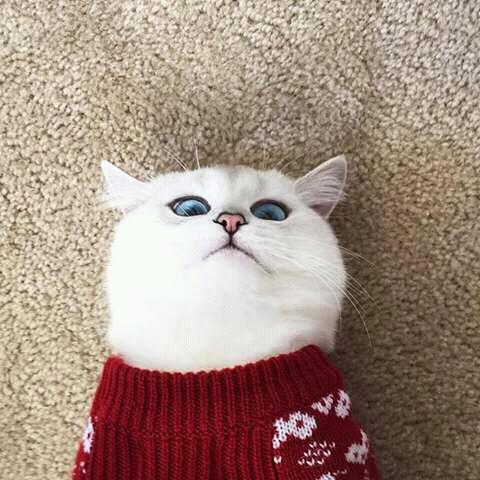 wp 1472589571403 - Kumpulan Wajah Jutek Kucing yang Bikin Gemas