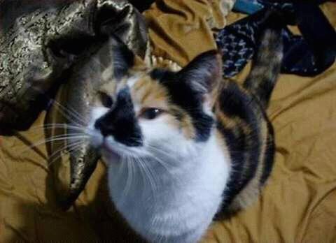 wp 1472589620753 - Kumpulan Wajah Jutek Kucing yang Bikin Gemas
