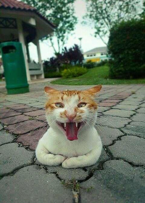 wp 1472589735737 - Kumpulan Wajah Jutek Kucing yang Bikin Gemas