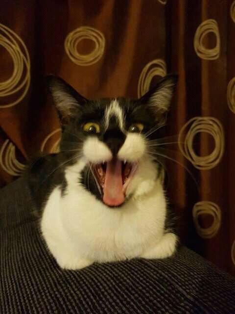 wp 1472589800951 - Kumpulan Wajah Jutek Kucing yang Bikin Gemas