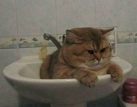 wp 1472589884156 - Kumpulan Wajah Jutek Kucing yang Bikin Gemas