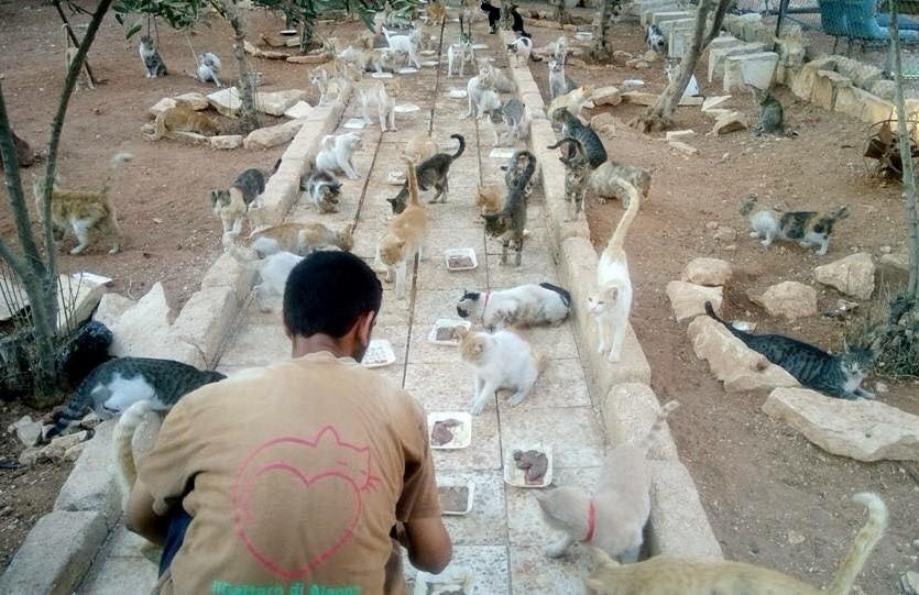 cat man of aleppo3 - Mohammad Alaa Al Jaleel: Sang Penyayang Kucing dari Aleppo