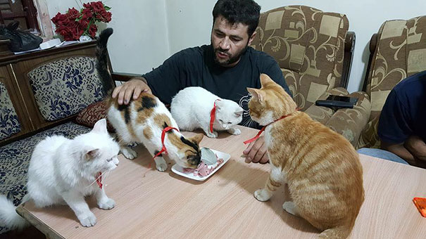 mohammad al jallel6 - Mohammad Alaa Al Jaleel: Sang Penyayang Kucing dari Aleppo