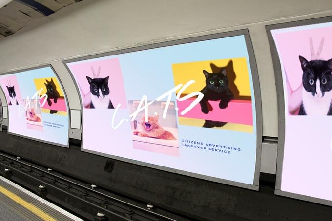 poster kucing - Puluhan Poster Kucing Menghiasi Sepanjang Jalan Di Stasiun London