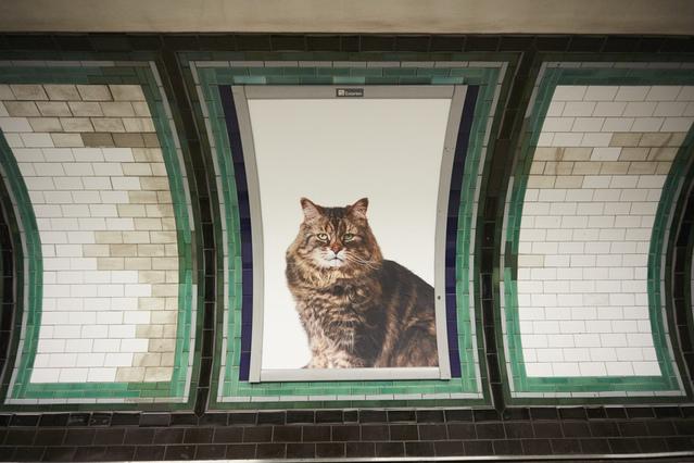 poster kucing2 - Puluhan Poster Kucing Menghiasi Sepanjang Jalan Di Stasiun London
