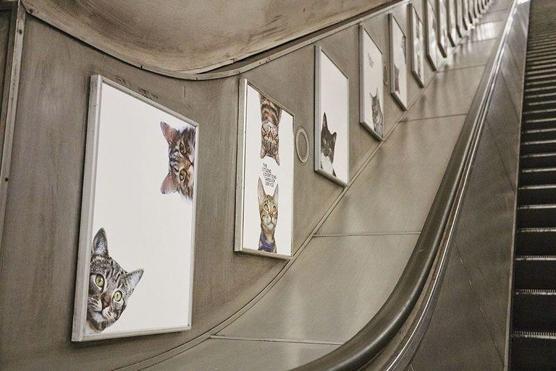 poster kuciing di eskalator. Gambar: Altasobscura