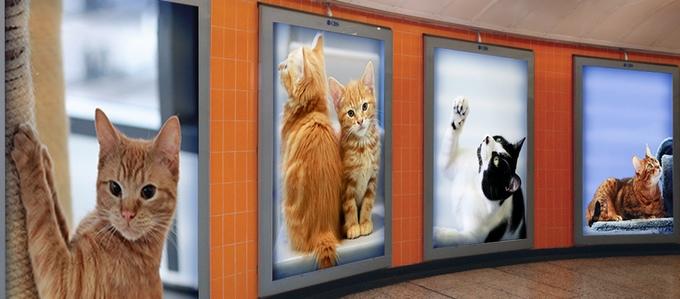 poster kucing disepanjang lorong stasiun. Gambar: kickstarter