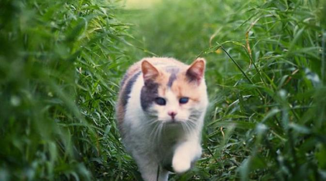 Salah satu seleb kucing yang juga  mengalami kebutaan