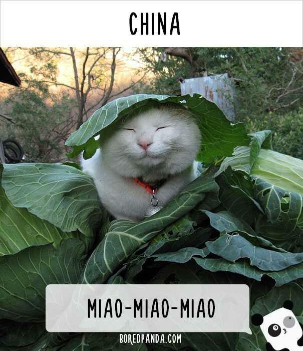 Gambar: Bored panda