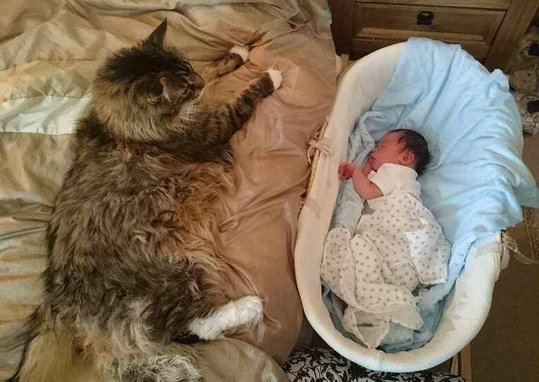 Ludo menjaga baby Ryder