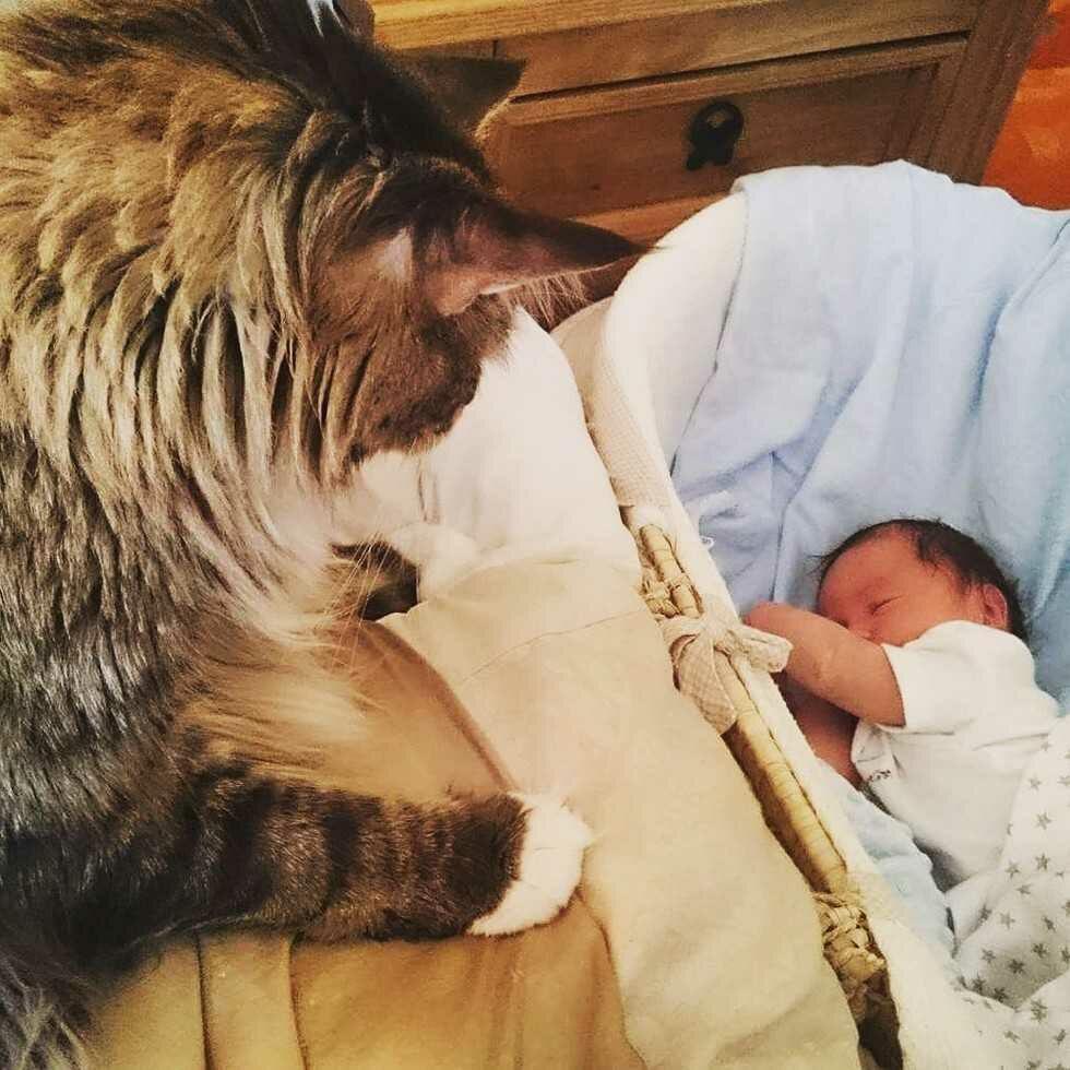 wp 1474228075673 - Ludo, Si Kucing Raksasa Pengasuh Bayi