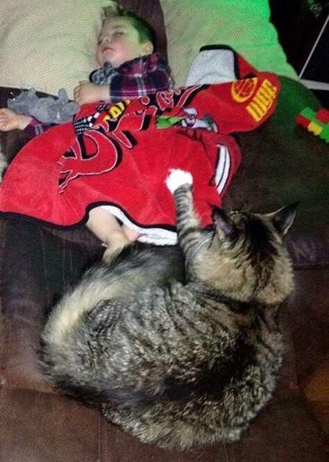 wp 1474228133910 - Ludo, Si Kucing Raksasa Pengasuh Bayi