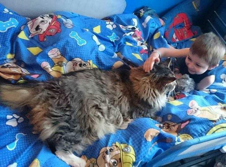 wp 1474228162026 - Ludo, Si Kucing Raksasa Pengasuh Bayi