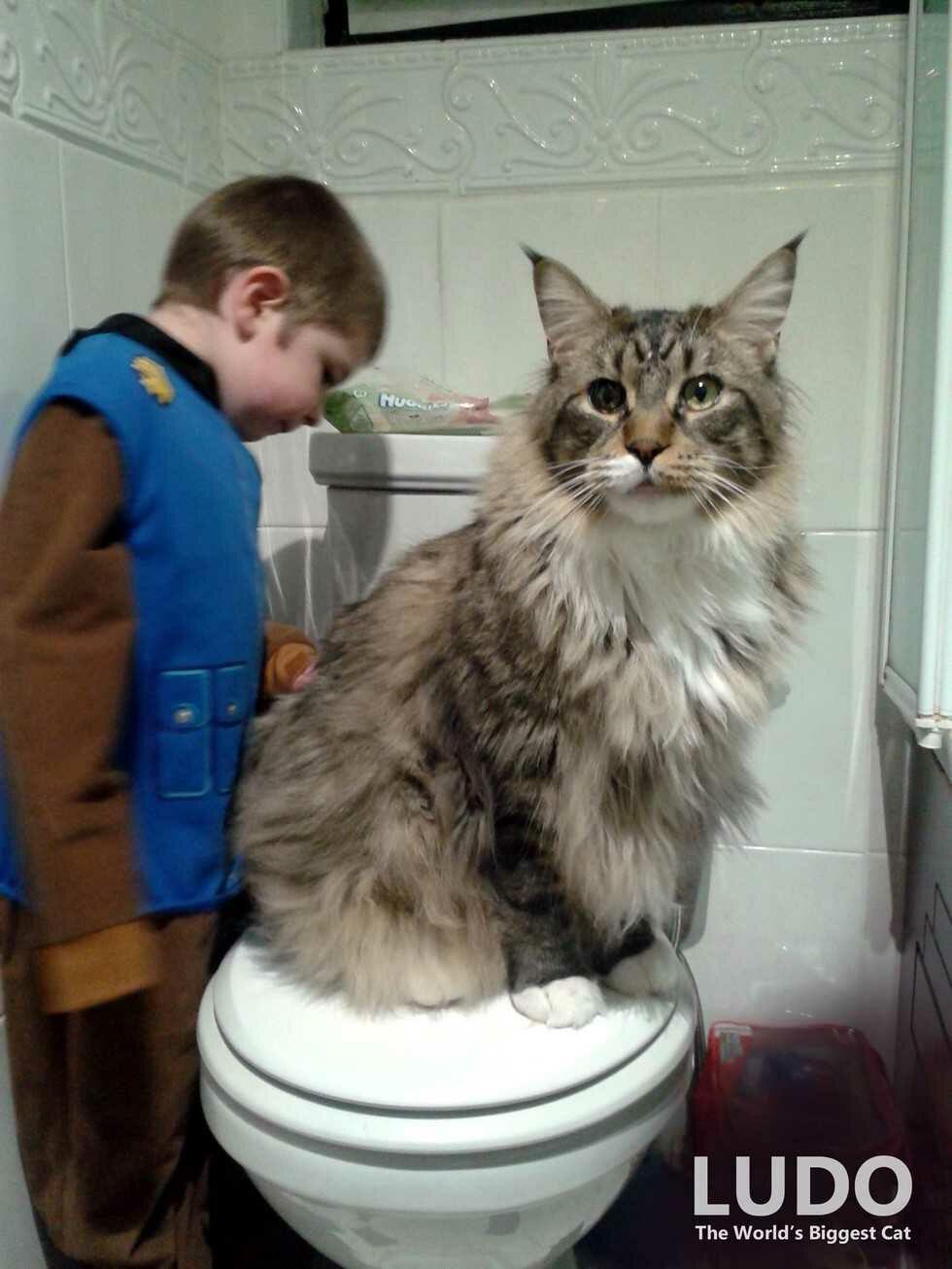 wp 1474252548533 - Ludo, Si Kucing Raksasa Pengasuh Bayi