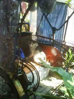 wp 1474492022999 - Open Donasi: Tukang Becak dan Kucing