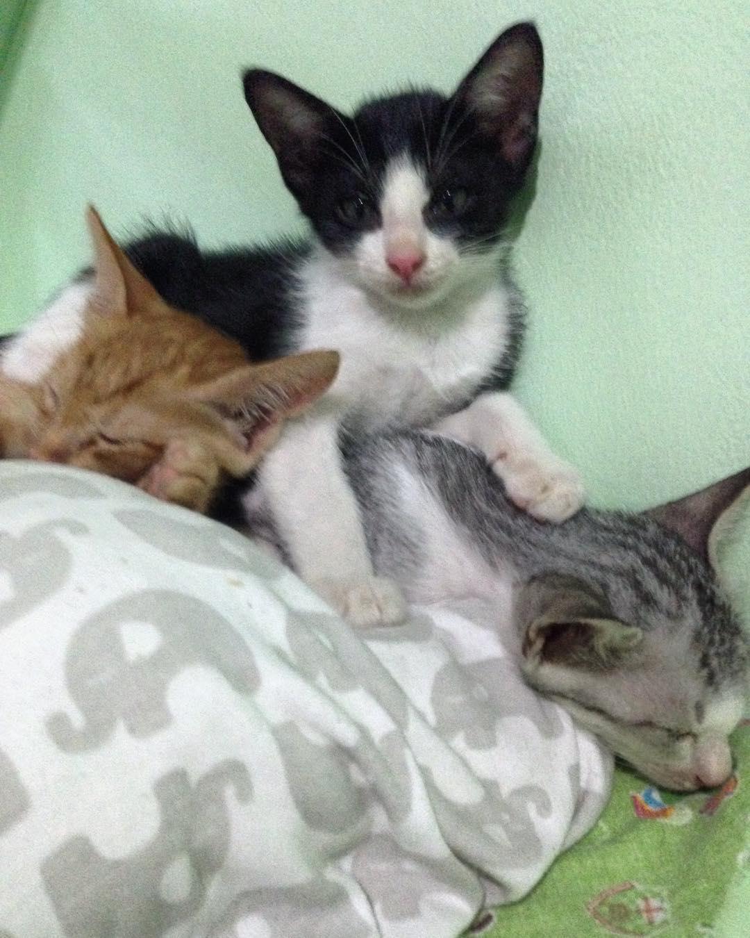 wp 1474683431696 - Villa Kitty: Villanya Kucing-Kucing Jalanan di Ubud, Bali
