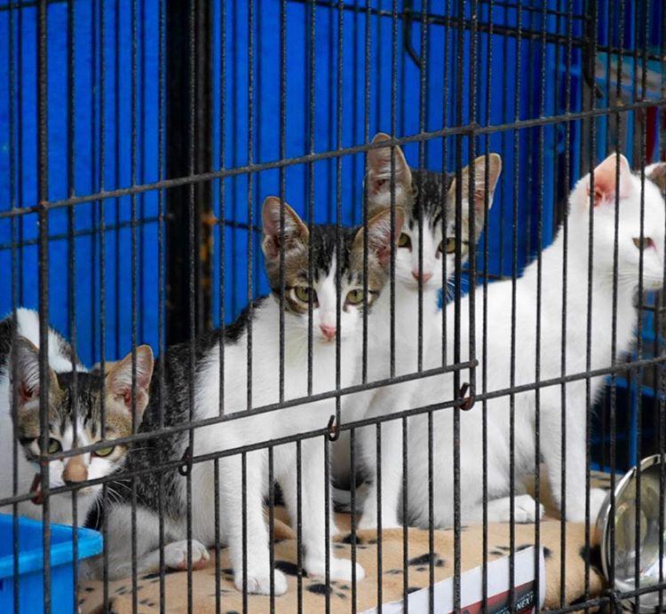 wp 1474683457831 - Villa Kitty: Villanya Kucing-Kucing Jalanan di Ubud, Bali