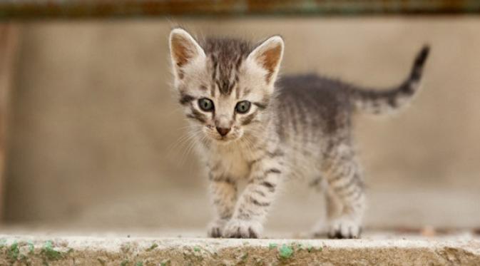 086221700 1409815873 kittens - Keuntungan yang Didapat dari Memelihara Kucing Kampung