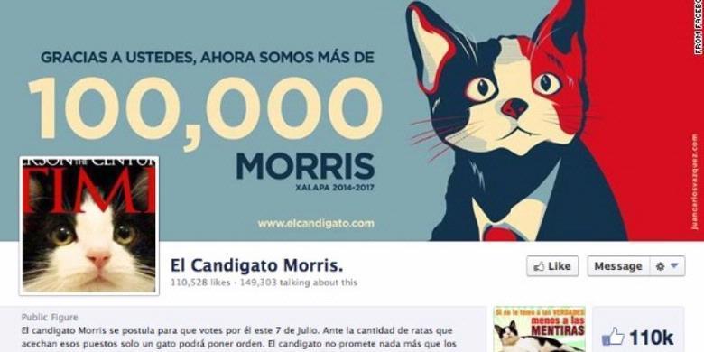 2148141 akun facebook morris si kucing 620X310 - Muak dengan Kinerja Pemerintah, Masyarakat Kota ini Memilih Kucing sebagai Walikota Mereka