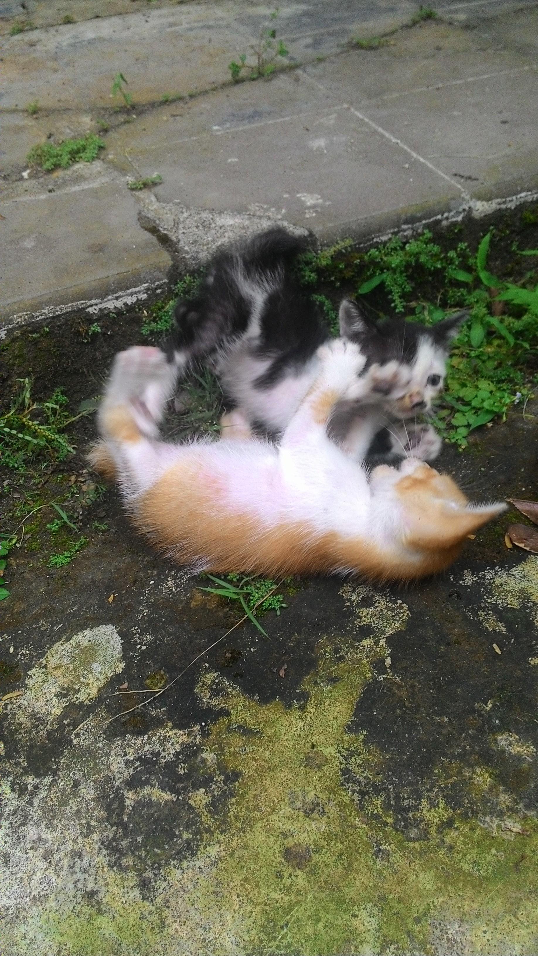 P 20160422 1558591 e1476221666642 - Keuntungan yang Didapat dari Memelihara Kucing Kampung