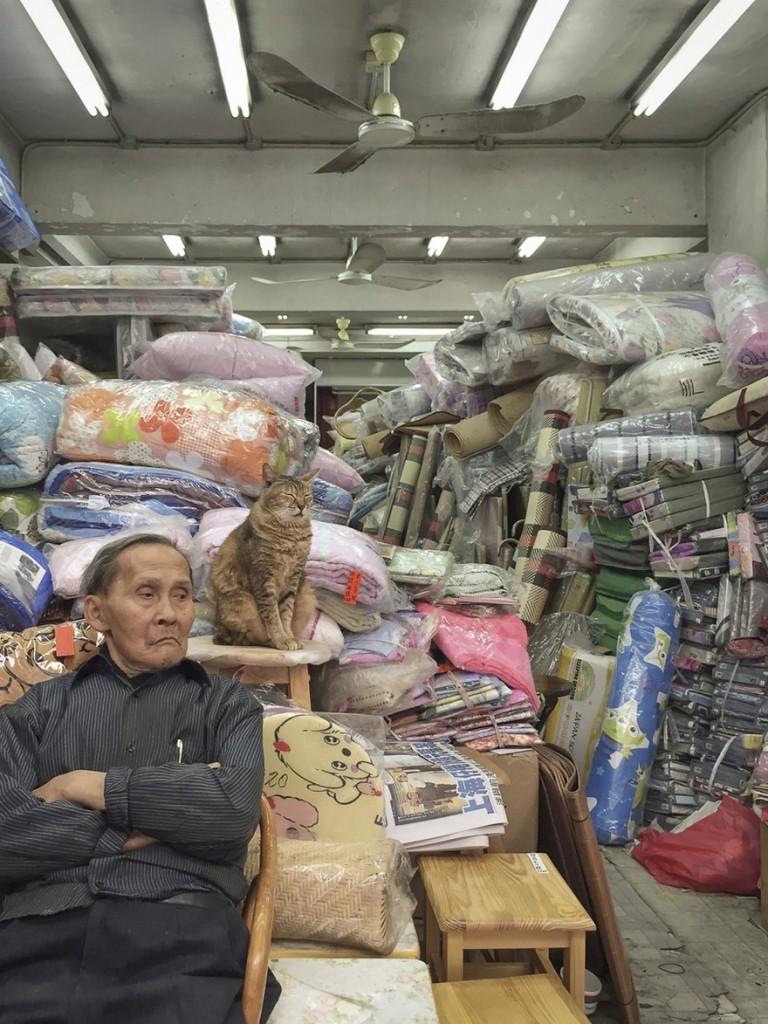 cats of hongkong 10 768x1024 - Potret Kehidupan Kucing di Daerah Pertokoan Hongkong yang Tidak Diketahui Banyak Orang