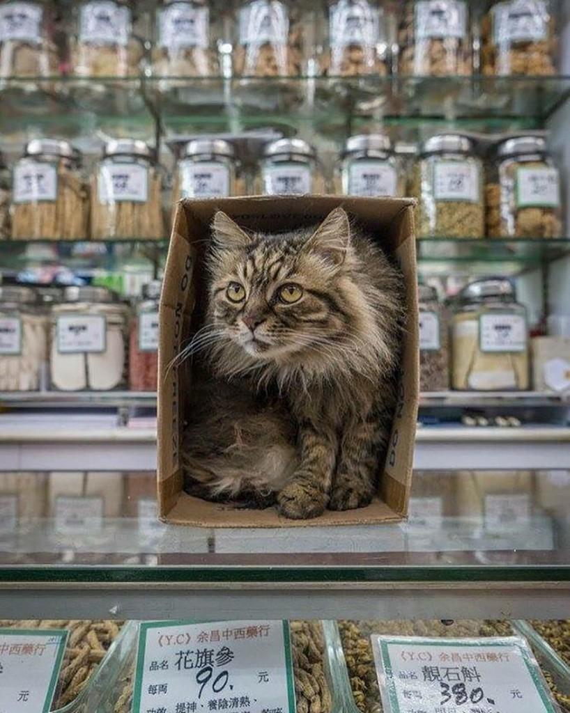 cats of hongkong 11 818x1024 - Potret Kehidupan Kucing di Daerah Pertokoan Hongkong yang Tidak Diketahui Banyak Orang