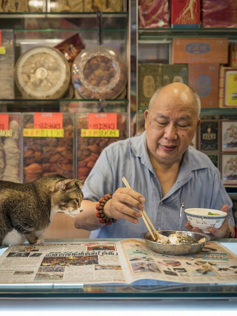 cats of hongkong 13 768x1024 - Potret Kehidupan Kucing di Daerah Pertokoan Hongkong yang Tidak Diketahui Banyak Orang