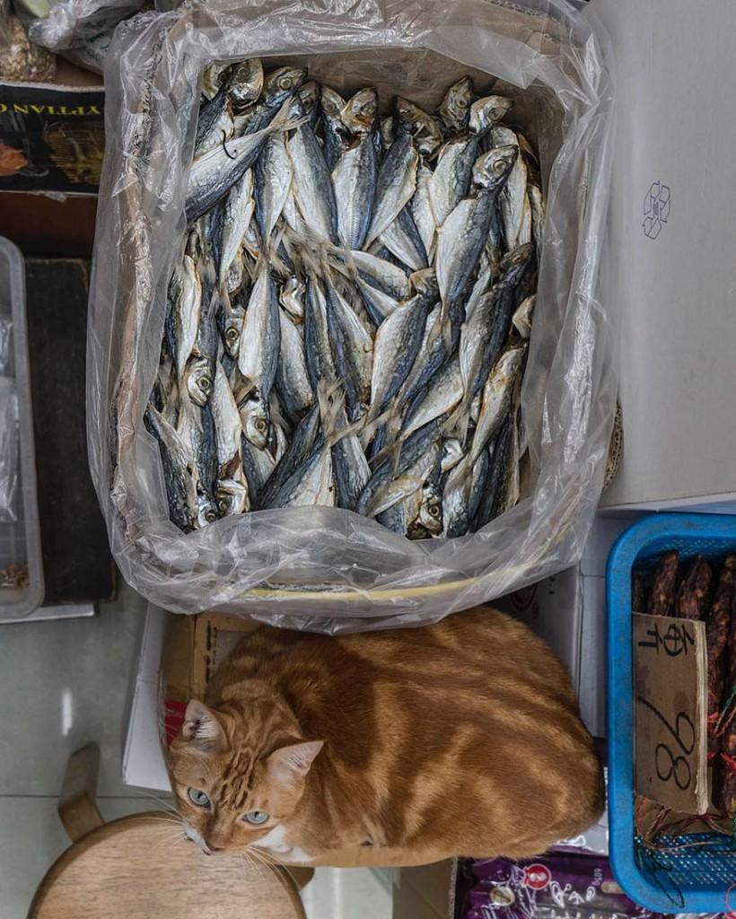 cats of hongkong 14 820x1024 - Potret Kehidupan Kucing di Daerah Pertokoan Hongkong yang Tidak Diketahui Banyak Orang