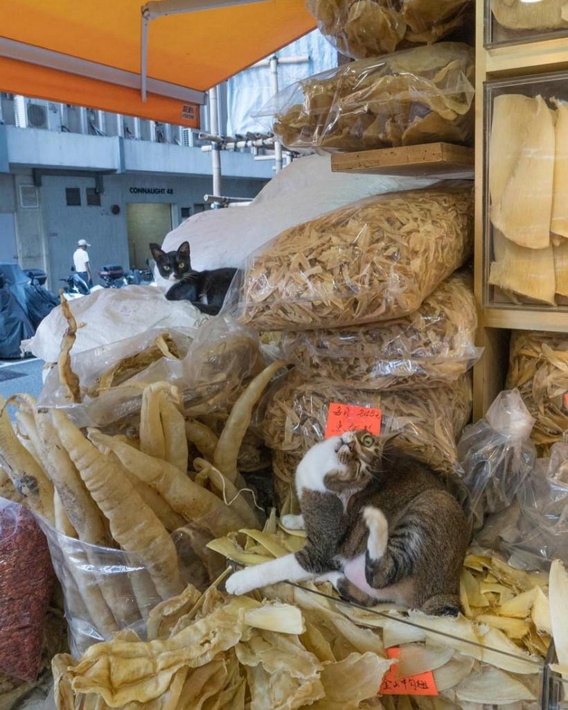 cats of hongkong 15 820x1024 - Potret Kehidupan Kucing di Daerah Pertokoan Hongkong yang Tidak Diketahui Banyak Orang