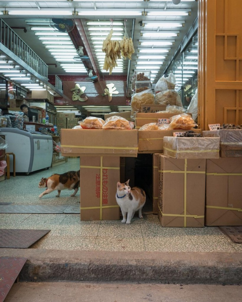 cats-of-hongkong-16