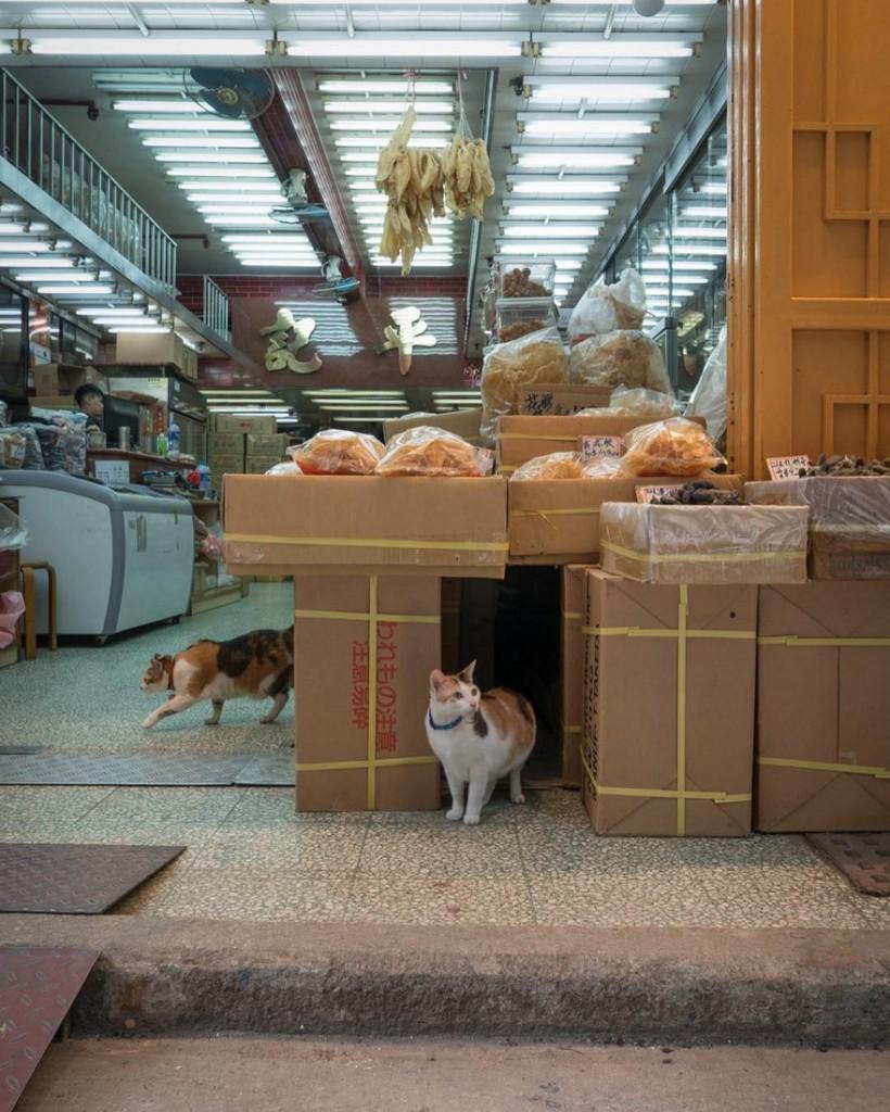 cats of hongkong 16 820x1024 - Potret Kehidupan Kucing di Daerah Pertokoan Hongkong yang Tidak Diketahui Banyak Orang