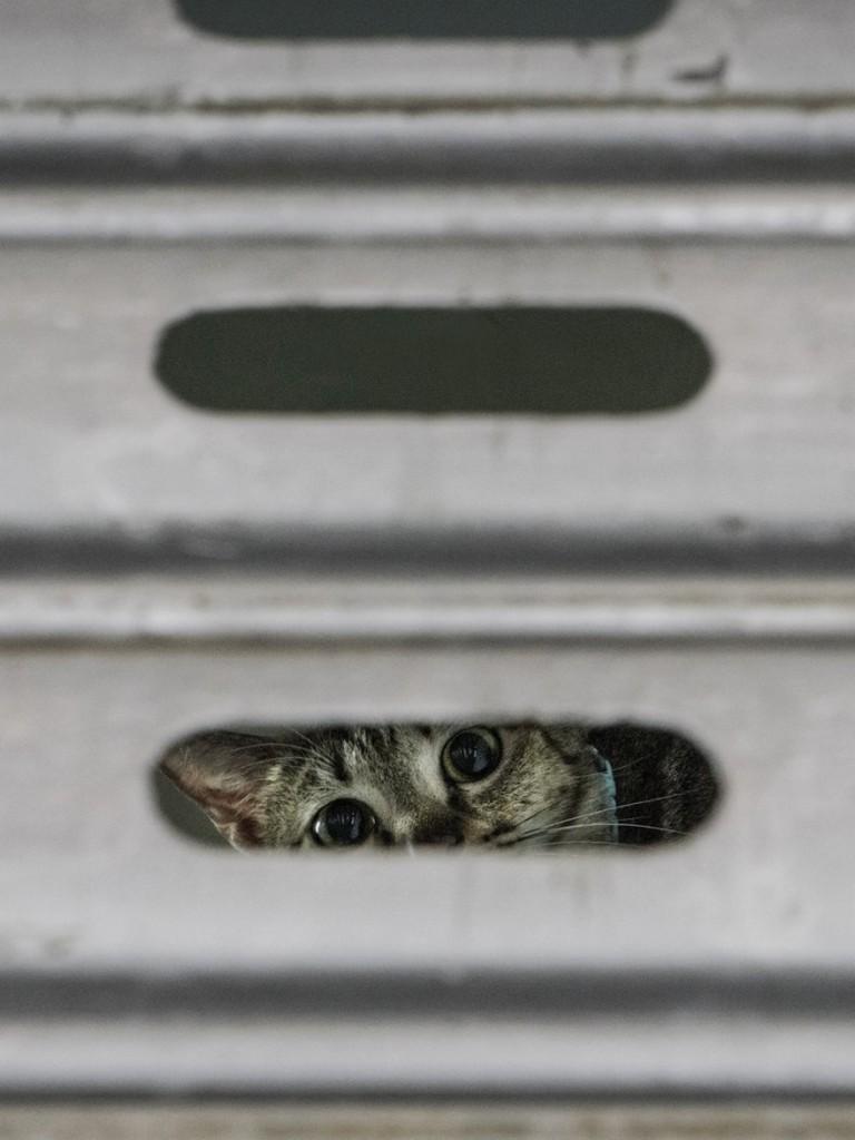 cats of hongkong 4 768x1024 - Potret Kehidupan Kucing di Daerah Pertokoan Hongkong yang Tidak Diketahui Banyak Orang