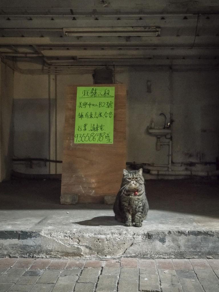 cats of hongkong 6 768x1024 - Potret Kehidupan Kucing di Daerah Pertokoan Hongkong yang Tidak Diketahui Banyak Orang