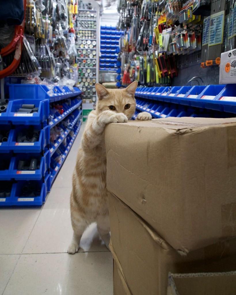 cats of hongkong 7 820x1024 - Potret Kehidupan Kucing di Daerah Pertokoan Hongkong yang Tidak Diketahui Banyak Orang